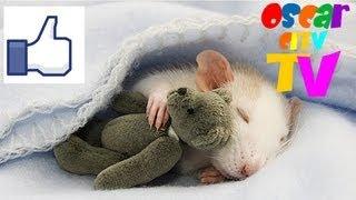 видео: Сладких снов! Живая открытка