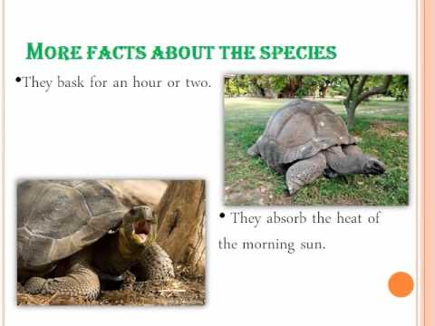 01 Horizon Academy School Nashik's International Science Activity Gaint tortoise Galapagos island