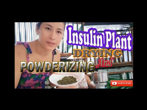 Insulin Leaves Drying And Powderizing