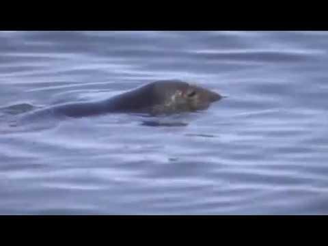Origin of Species in Dub: Introduction