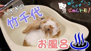 うさぎをお風呂に初めて入れてみた! - I first tried putting a rabbit in a bath! thumbnail