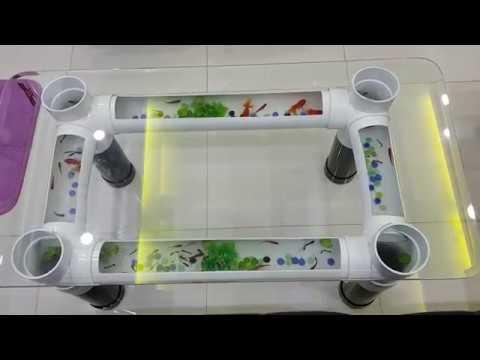 Cách làm hồ nuôi cá từ ống nhựa PVC kết hợp bàn khách.