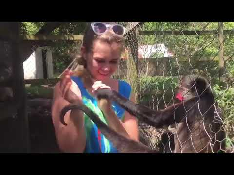 Spider Monkey Hugs Woman