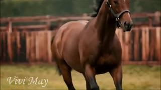 FRANKEL//Лошадь в $200 млн // EQUESTRIAN SPORT