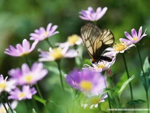 เพลงคิดถึง ประกอบภาพดอกไม้