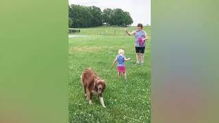 This will make you Laugh | Best Funny Dog Fails August 2018