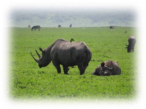 TANZANIA 2016 Part5 Ngorongoro
