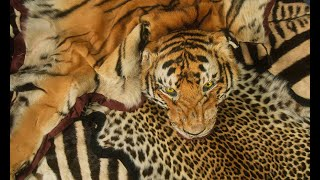 A Spotlight on the Impact of the Wildlife Trade
