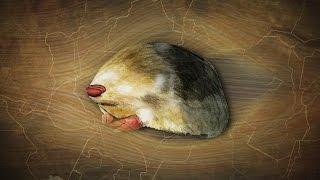 The Golden Mole: Blind Sand-Swimmer