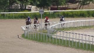 20.05.2018 - Ограничительный приз на лошадях 2-х лет ахалтекинской породы - Патах-Шах