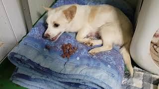 간식먹는 미란이 #사지말고입양하세요 #유기동물보호소 #…