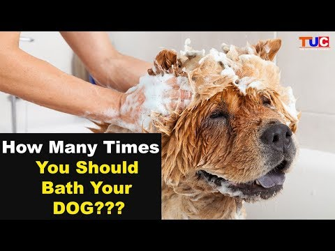 How Many Times You Should Bathe Your DOG??? in HINDI: TUC