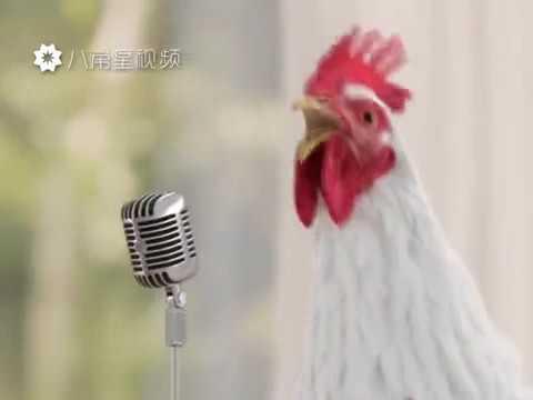Chicken singing/dancing  (2017)