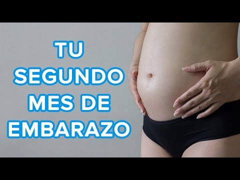 Signos y sintomas en el segundo mes de embarazo