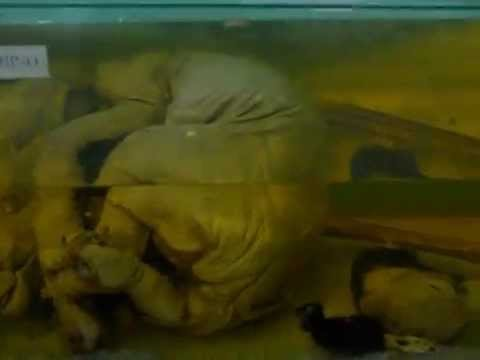 gurgaon zoo