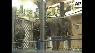 new elephant house in Moscow Zoo