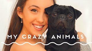 MEET MY 10 DOGS & CATS!!!