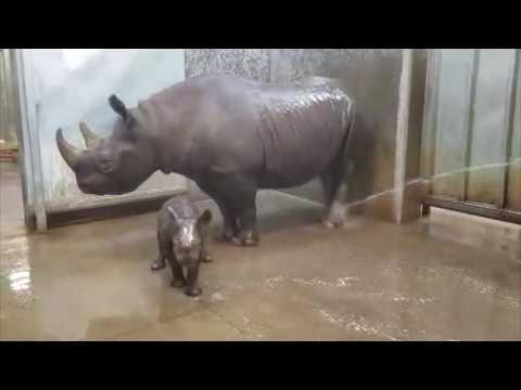 Rhino Bath