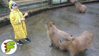 おでかけ 伊豆アニマルキングダムへいったよ!キリンさんたちにエサをあげよう! トイキッズ