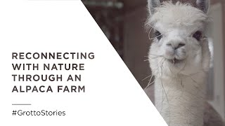 Reconnecting with Nature Through an Alpaca Farm