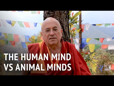 Matthieu Ricard – The Human Mind vs Animal Minds