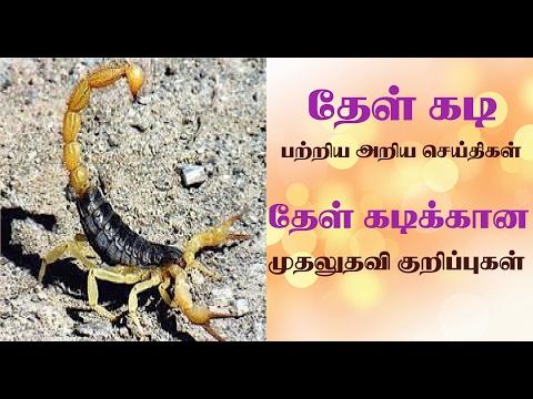 scorpion bite treatment in tamil | thel kadi vaithiyam| தேள் கடிக்கு முதலுதவி குறிப்புகள்