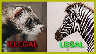 Exotic Pets Legal In California Mammals And Birds Youtube