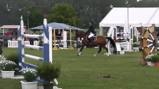 5j Nemax-pony 144 Zu Verkaufen