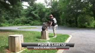 "Mixed Breed ""pepper"" Gains Off Leash Obedience With Off Leash K9 Training, Maryland"