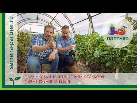 Как правильно удалять пасынки у помидор видео