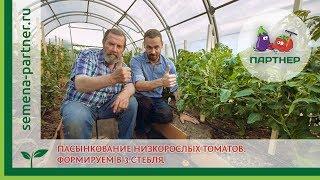 Пасынкование томатов в теплице: схема и видео Как правильно пасынковать томаты в теплице