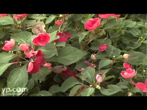 Weems Tree & Landscaping Service Tyler TX Lawn Garden