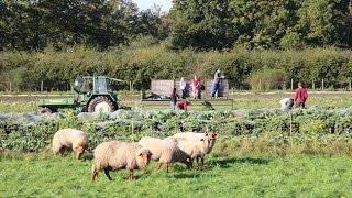 Alternative Formen der Landwirtschaft | Werkstatt Zukunft