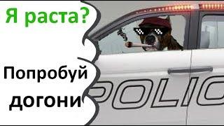 Собака таксист. Лада седан, баклажан. Зеленоглазое такси