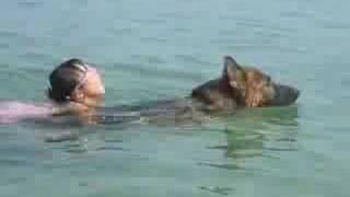 子供を背中に乗せて泳ぐベリー。