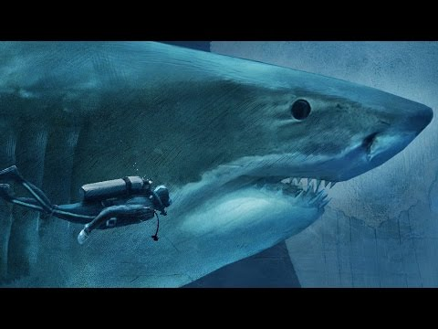 Sizing Up Sharks The Lords Of The Sea Megalodon Compared To A Diver Youtube