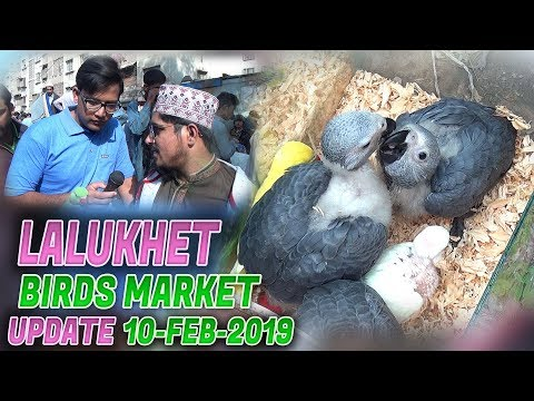 Lalukhet Sunday birds Market 10-2-2019 Latest Updates (Jamshed Asmi Informative Channel)  Urdu/Hindi
