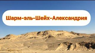 ШАРМ ЭЛЬ ШЕЙХ АЛЕКСАНДРИЯ О НАШЕЙ ПОЕЗДКЕ В АЛЕКСАНДРИЮ