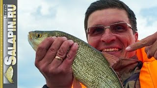 Ловля плотвы с лодки на озере Плещеево, поплавочная рыбалка. [salapinru]
