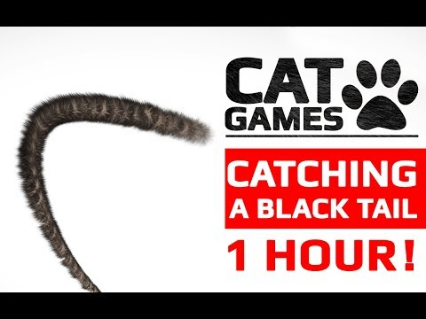 CAT GAMES - CATCHING A BLACK TAIL 1 HOUR VERSION (Entertainment Video for Cats to Watch)