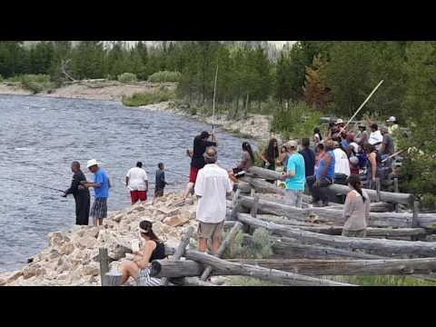 Stanley Idaho Sawtooth Hatchery, 2016 Chinook Fishing Season, Sho-Ban Native Americans