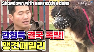[ENG SUB] Showdown with 'aggressive dog family' [Dogs are incredible][It like a Cesar`s show]