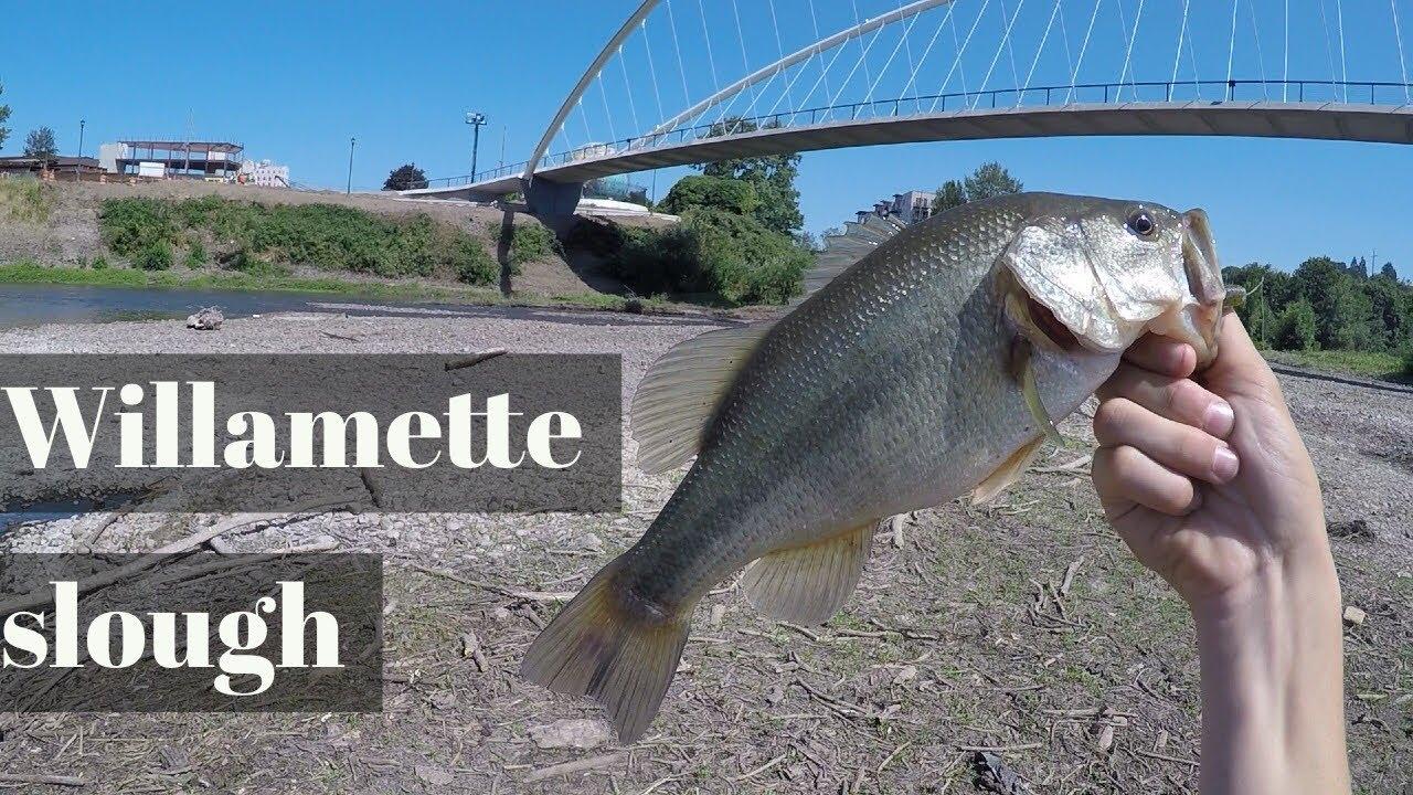 Bass fishing on the willamette river salem oregon youtube for Bass fishing oregon