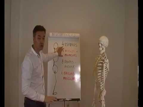 reprogramación-corporal-postural-a-través-de-las-cadenas-musculares