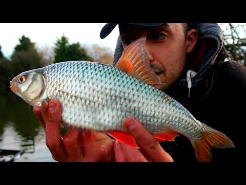 WINTER ROACH FISHING & NEW PB ROACH