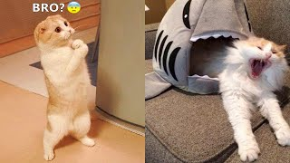 Funniest Animals - Best Of The 2021 Funny Animal Videos #56