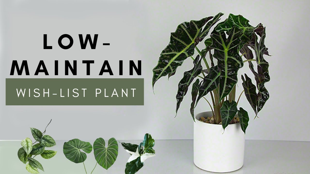 Cool Low Maintenance Houseplants Review For Beginners Rare Easy Plants Indoor A Garden Cat Ep 35 Youtube