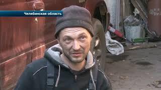В Челябинской области собаки едва не загрызли 8-летнего мальчика