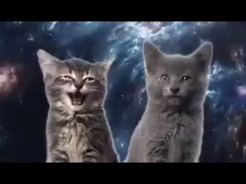Cats Cantando Meow    Cat :3  