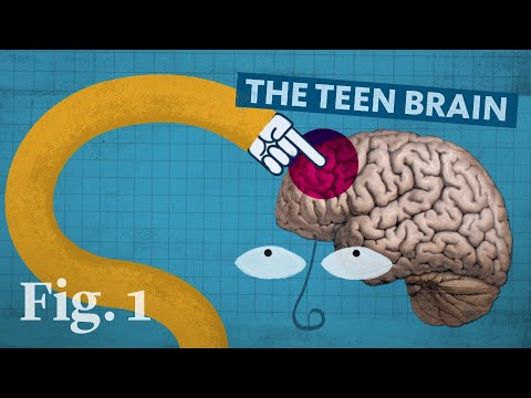 Why the teenage brain has an evolutionary advantage